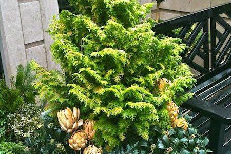 Winter Fern w/pine cones