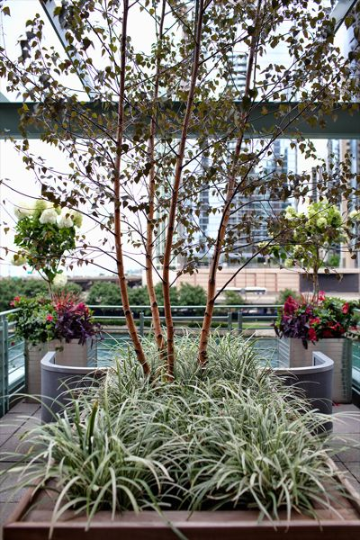 North Water - Chicago Roof Deck Project