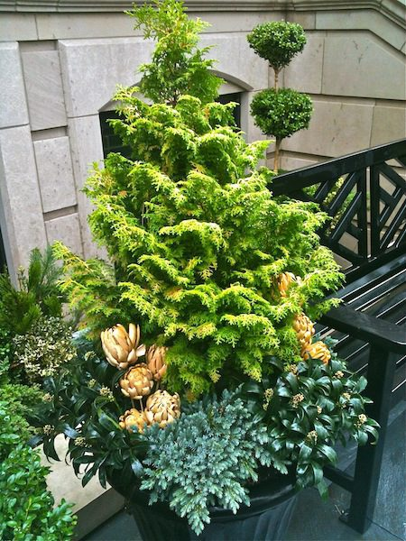 Winter - Chicago Landscaping