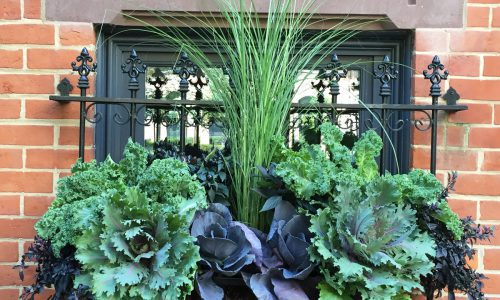 The Gold of the Gold Coast - Chicago Landscaping Project