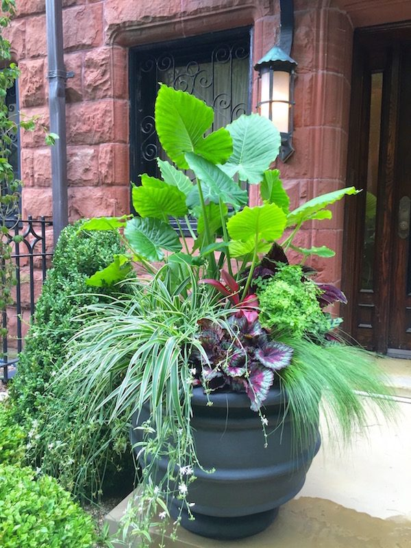 Astor Aristocrats - Chicago Landscaping Project