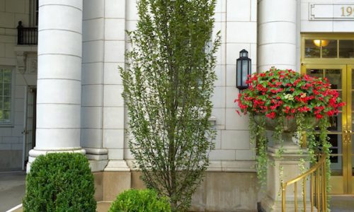 Lake Shore Drive Living - Chicago Landscaping Project