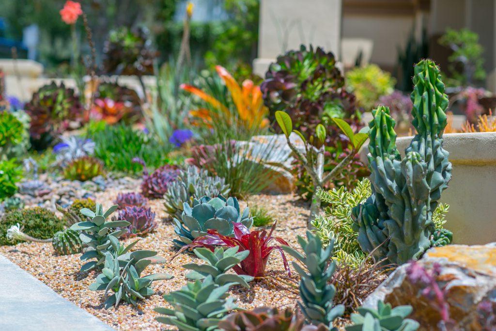 Desert Garden Landscaping Design