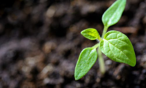 Soil in Garden